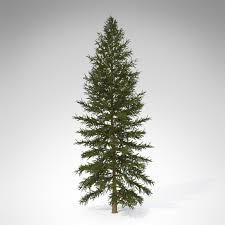 douglas fir tree 3d xfrogplants douglas fir cgtrader