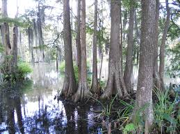 Louisiana nature activities images 35 things to do in lafayette louisiana backpacking diplomacy jpg