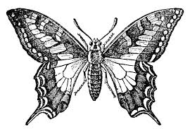 butterfly clipart butterfly wing pencil and in color butterfly
