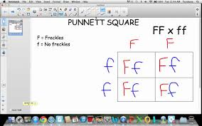 punnett square tutorial  youtube with  from youtubecom