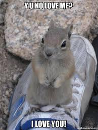 Why You No Love Me Meme - y u no love me i love you standover squirrel make a meme