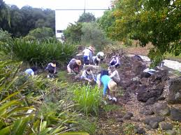 native plants of hawaii friends of halawa xeriscape garden fohxg board of water supply