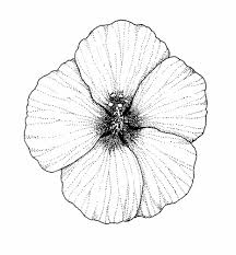 coloring pictures of hibiscus flowers dahlia coloring pages 221445 hibiscus coloring pages posters