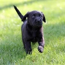 14 best guide dogs images on pinterest guide dog service dogs