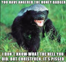 Meme Honey Badger - angry honey badger meme on imgur