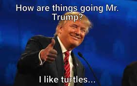 I Like Turtles Meme - how are things going mr trump i like turtles meme meme rewards