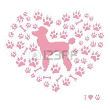 35 952 537 poodle puppy stock vector illustration and royalty free