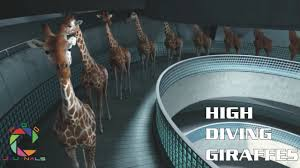 high diving giraffes short animation must see youtube