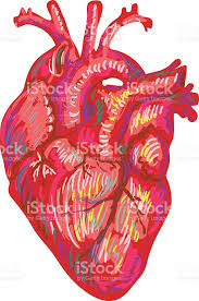 human heart sketch design medical anatomical art coronal artery