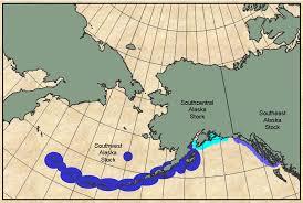 Map Of Aleutian Islands Doroff A M Hatfield B Burdin A Nichol L Hattoris K
