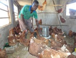 overview of poultry industry in south africa the poultry guide