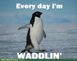 Penguin Memes - 16 penguin memes that are too adorbs for words sayingimages com