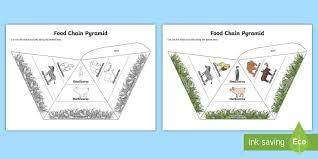 food chain pyramids foldable visual aids food chain pyramids