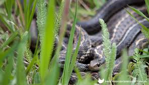 How To Avoid Snakes In Backyard How To Keep Your Chicken Safe From Snakes