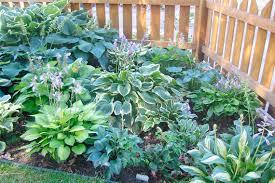 perennial flowering plants landscaping gardening ideas