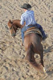 Wildfire Yoga Lexington Ky by 846 Best Horses Just About Anything Images On Pinterest Horses
