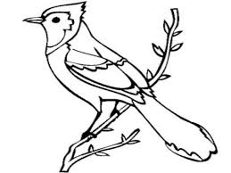 jay bird coloring page flying blue jay coloring pages blue jay