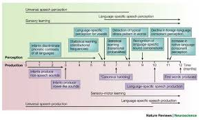 language setting pattern used in society early language acquisition cracking the speech code nature