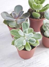 Indoor Plant For Office Desk Best 25 Desk Plant Ideas On Pinterest Desk Plant Decor And