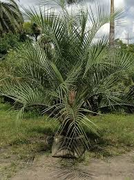 bent palm tree farm llc plantant