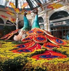 Bellagio Botanical Garden Experience The Richness Of Autumn Inside Bellagio S Conservatory