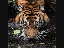 free survivor eye of the tiger mp3 2 82 mb euphoria audio