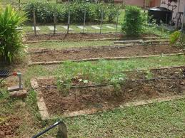 backyard ideas small vegetable garden layout plans small