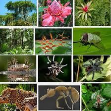 Tropical Rainforest Plant Species List - 19 tropical amazon rainforest facts