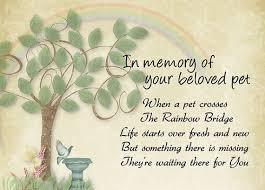 condolences for loss of pet pet loss sympathy card pet waits for you memorial sympathy