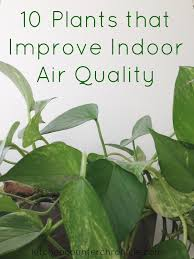 best plants for air quality 10 plants that improve indoor air quality indoor air quality