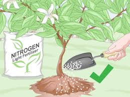 3 ways to prepare soil for fruit trees wikihow