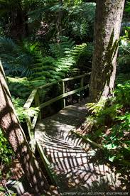 rainforest native plants fernglen native plant gardens is a great collection of new zealand