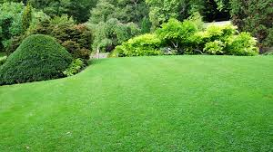 lawn care vancouver guide and important information for home owners