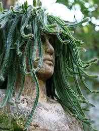 medusa cactus planter interior design ideas