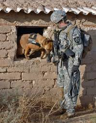 belgian shepherd us army the dogs of war u2013 a tribute to the mwd military working dogs