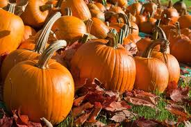 Stanly Lane Napa Pumpkin Patch by Community News Center Broadcasting Live Local Reaching Out