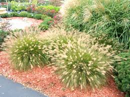get it growing ornamental grass adds with minimum effort