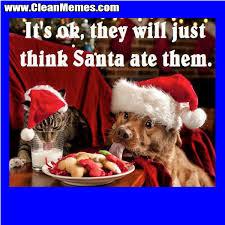 Funny Christmas Cat Memes - think santa at them clean memes