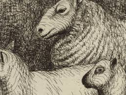 art and about henry moore u0027s sheep sketches