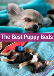 Best Dog Bed For Chewers Best Puppy Beds For Your Sleepy Little Dog The Happy Puppy Site
