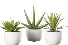 langley street aldorough 3 piece faux southwest succulent set