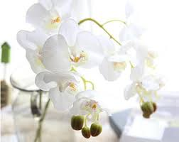 orchid centerpiece orchid centerpiece etsy