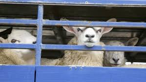 Seeking Live Mps To Debate Petition Seeking Live Animal Exports Ban Farmers