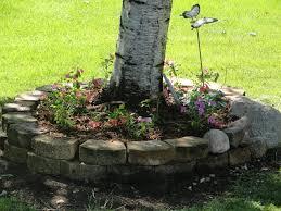 raised flower bed around birch tree where evergreen bushes were