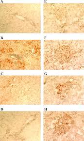 adenovirus mediated gene transfer and lipoprotein mediated protein