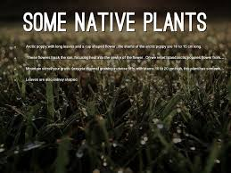 native plant project biome project tundra by chris gross