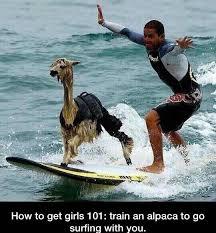 Alpaca Meme - alpaca meme by drake d memedroid