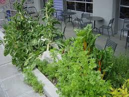Urban Veggie Garden - vegetable gardens a gallery on flickr