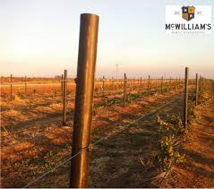 sustainability is the future for vineyard trellis posts woodshield
