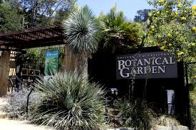 list of california native plants university of california botanical garden wikipedia